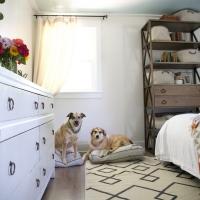 doggy_beds_wayfair