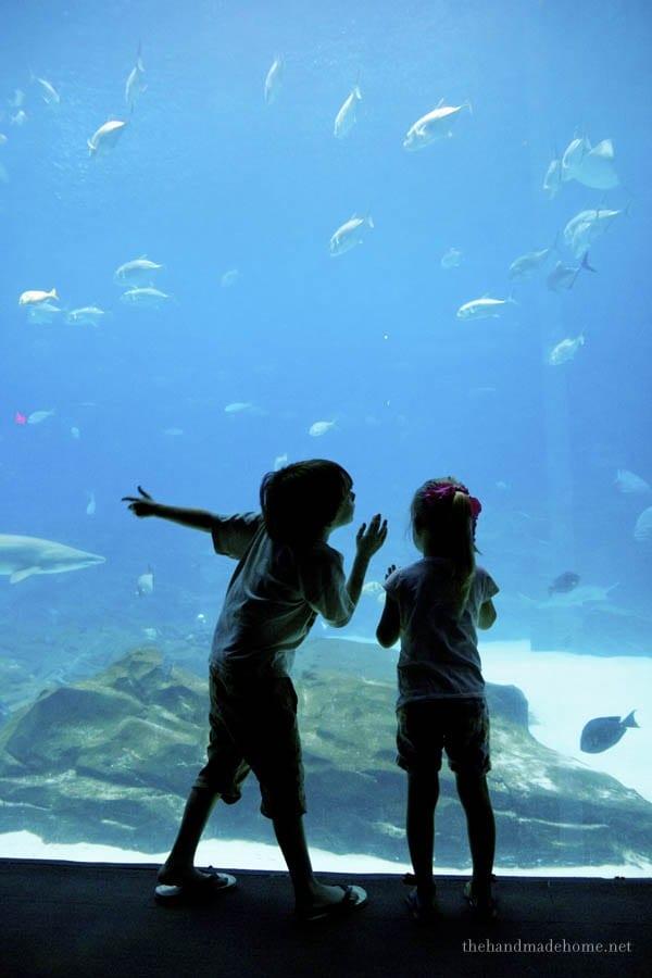 aquarium_georgia2