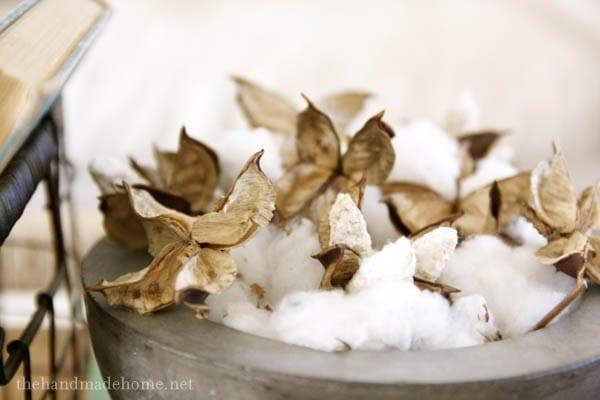cotton_bowl