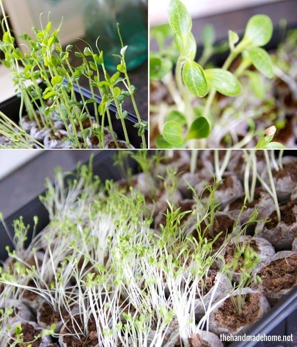 growing_a_garden