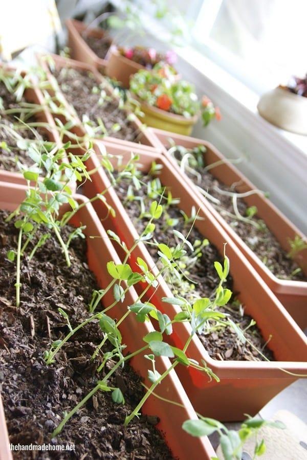 hardening_garden
