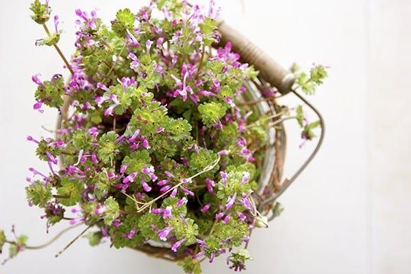 fresh_flowers