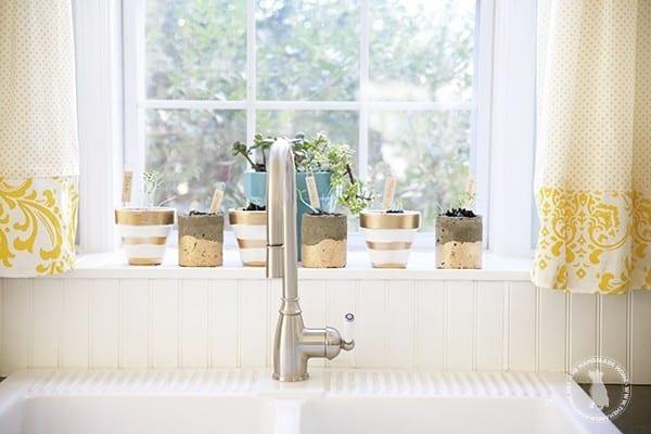 windowsill_herb_garden