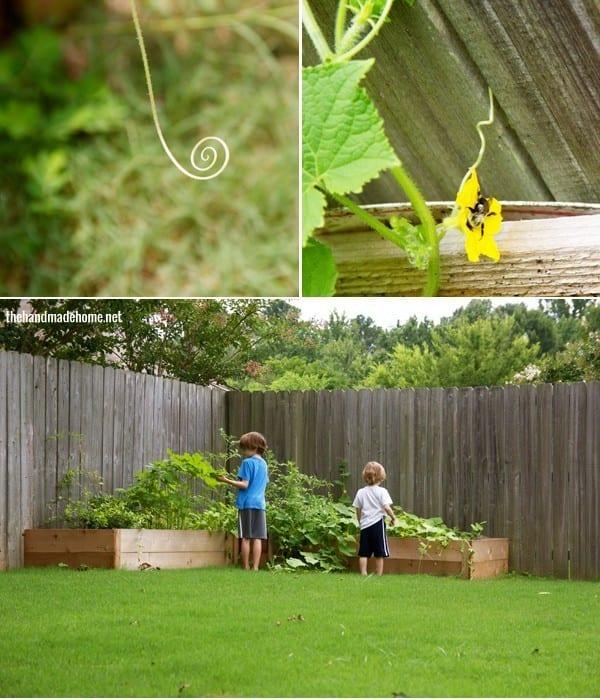 gardening-1