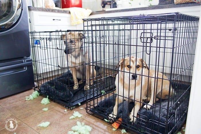 puppies_demolish_their_bed