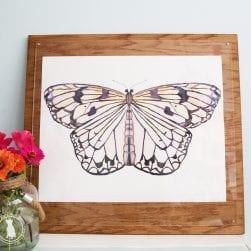 pastel_butterfly