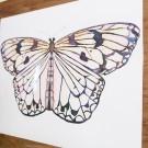 pastel_butterfly2