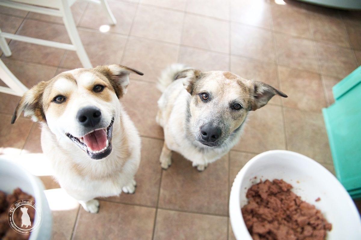 doggie_food_ceasars